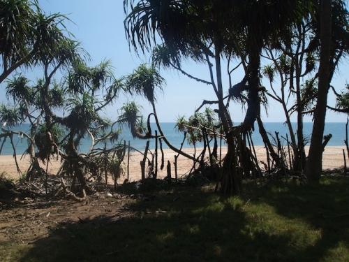 Beachfornt bareland