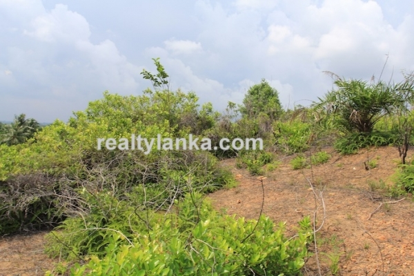 Property with a Relaxing View Over Paady