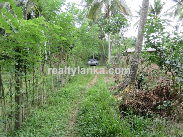 Property with a Relaxing Panoramic View Over Paady