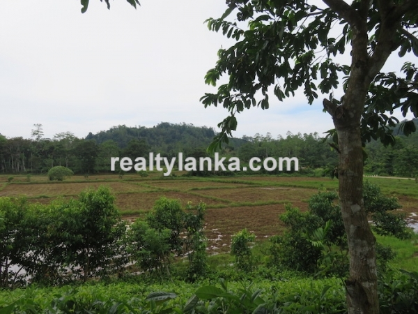 5 Acres Tea Estate Overlooking Paddy