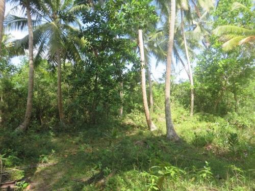 Lush Bareland In  Galduwa