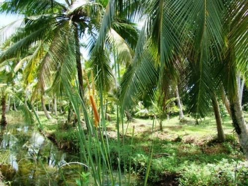 Coconut Island near Galle