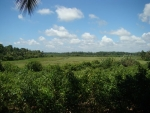 190 Perch of Cinnamon Land -