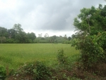 240 perches of bare land near the Serene river  -