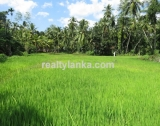 Property With 270 Panoramic view of Paddy GI 122