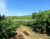 100 Acres Mix Plantation BI 73
