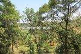 Bareland In Ginthota GI 138