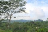 Tea Estate In Imaduwa WI 67