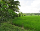 Lush Property with Paddy View AI 12