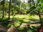 Fertile Bare land within easy reach of the Main Road -