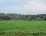 AI 22 - Property With A Beautiful Paddy View